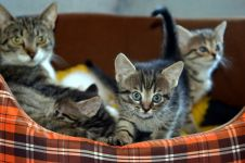 Hasil riset, pria yang menyukai kucing sulit mendapatkan teman kencan
