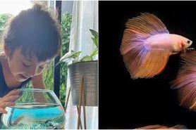 5 Seleb punya hobi pelihara ikan cupang, bentuknya unik banget