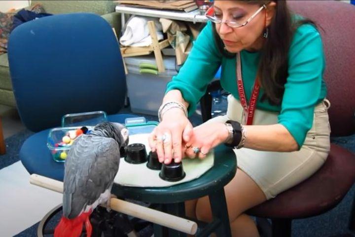 Burung Beo kalahkan mahasiswa asal Harvard dalam uji daya ingat