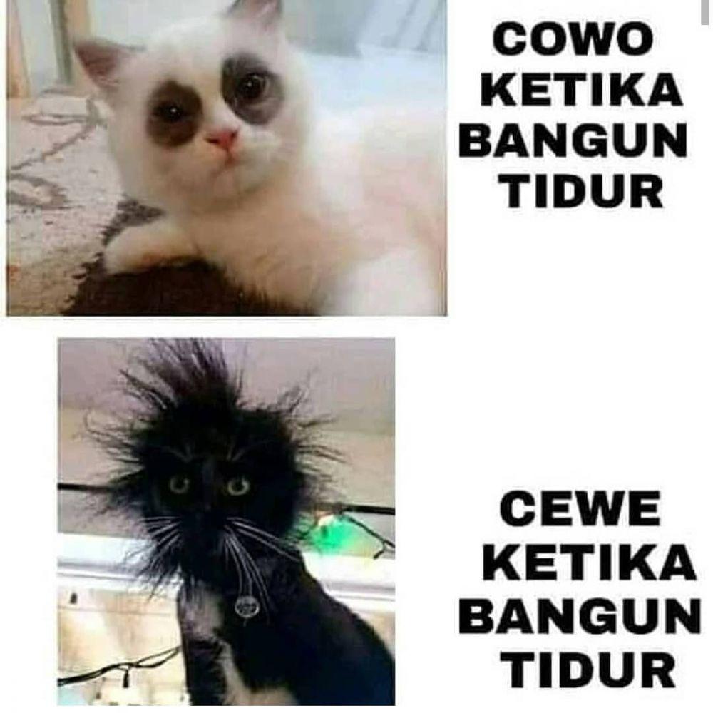 meme lucu ekspresi kucing © 2020 instagram.com