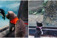 10 Momen lucu ketika hewan peliharaan diajak ke kebun binatang
