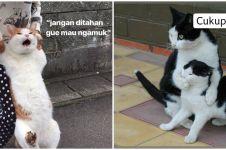 10 Meme lucu kucing lagi marah ini bikin susah tahan tawa