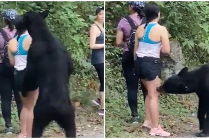 Viral video wanita didekati beruang, bukannya lari malah selfie