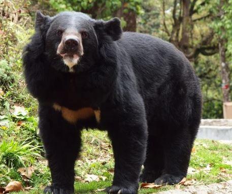 nenek 82 tahun beruang worldofbuzz.com