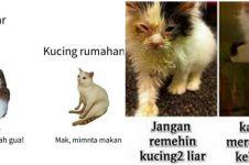 10 Meme beda nasib kucing kampung dan rumahan, kocak