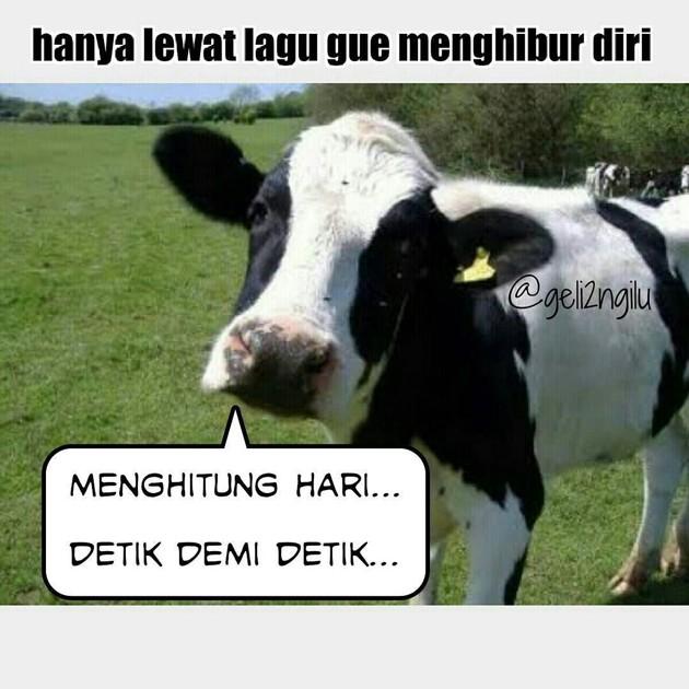meme lucu sapi kurban berbagai sumber