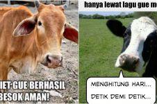 10 Meme lucu 'perasaan sapi' jelang Idul Adha ini bikin senyum tipis