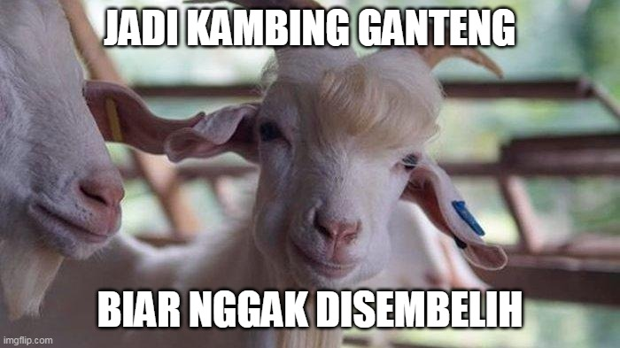 10 Meme lucu cara kambing kabur © 2020 brilio.net