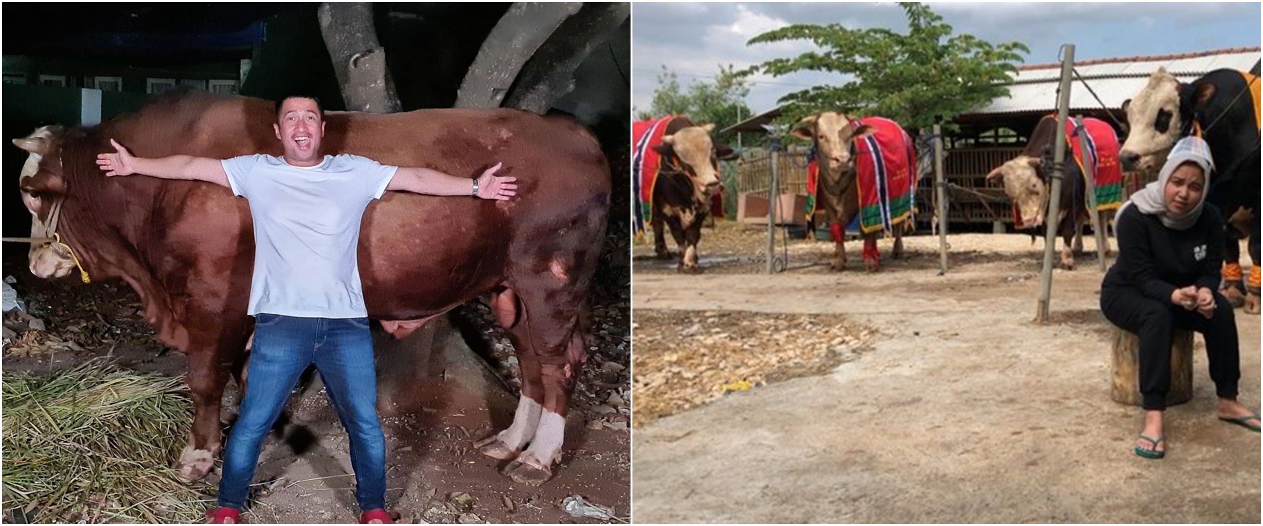 Rayakan Idul Adha, 5 seleb ini kurbankan hewan lebih dari satu
