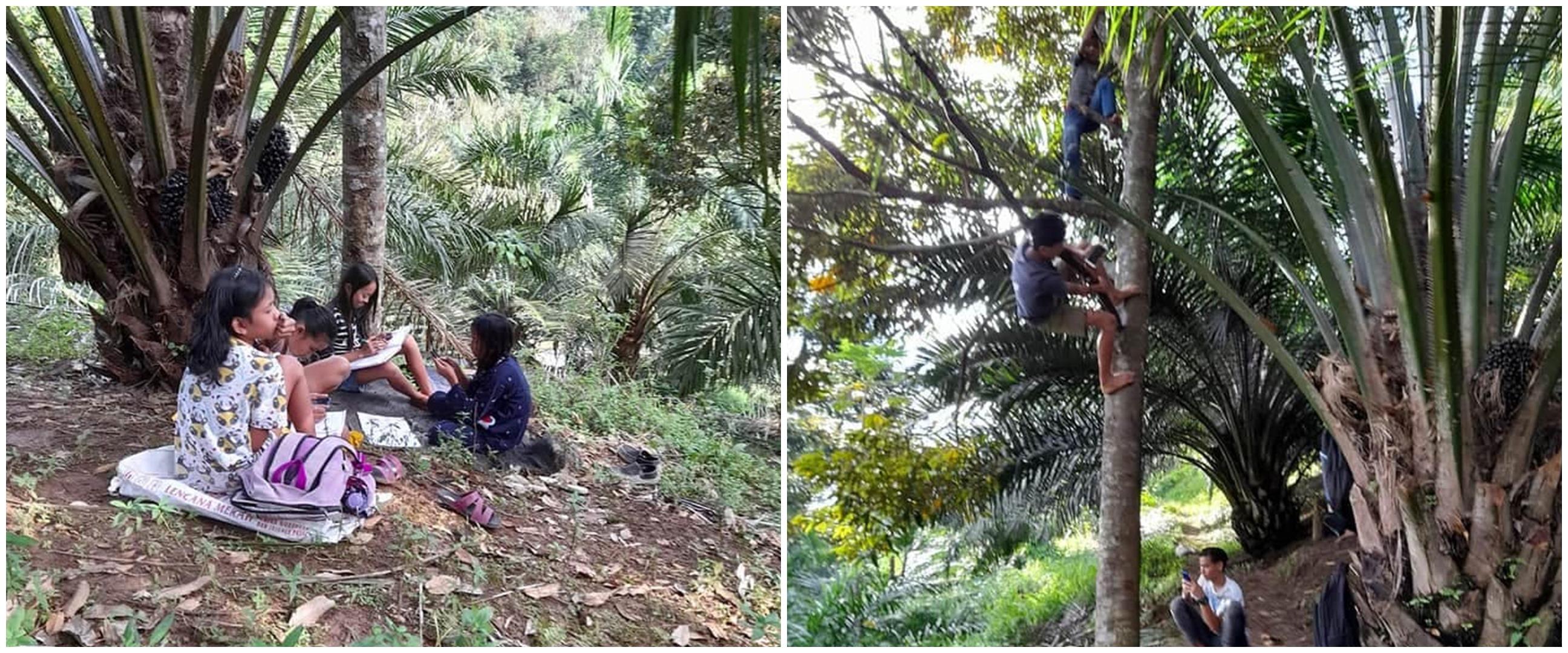 10 Potret perjuangan pelajar di Simalungun, naik pohon demi sinyal