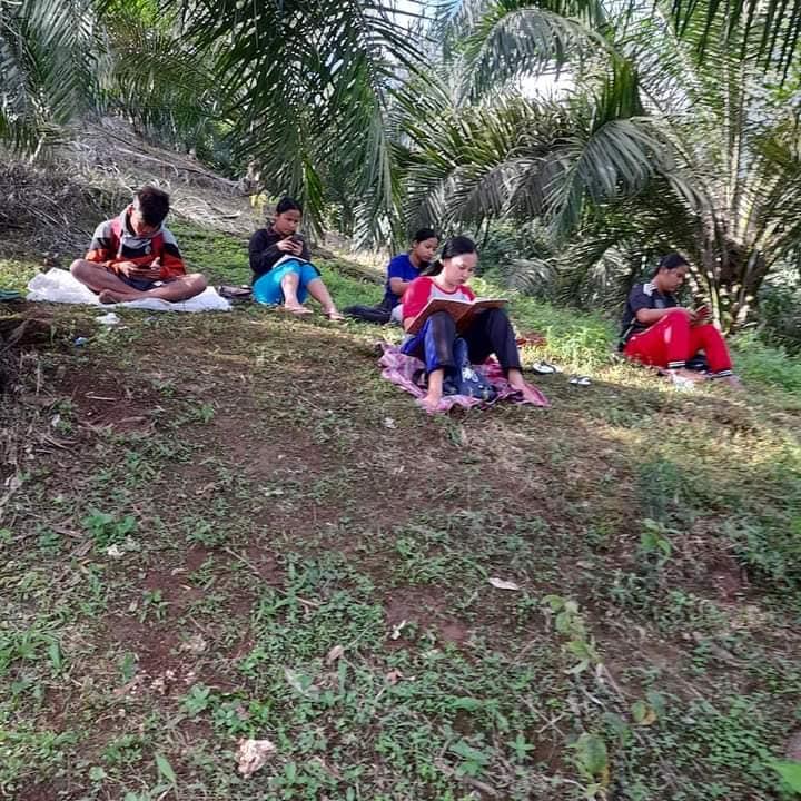 Pelajar naik pohon demi sinyal Facebook/ Renni Rosari Sinaga