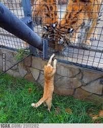 Potret kucing oren Berbagai sumber
