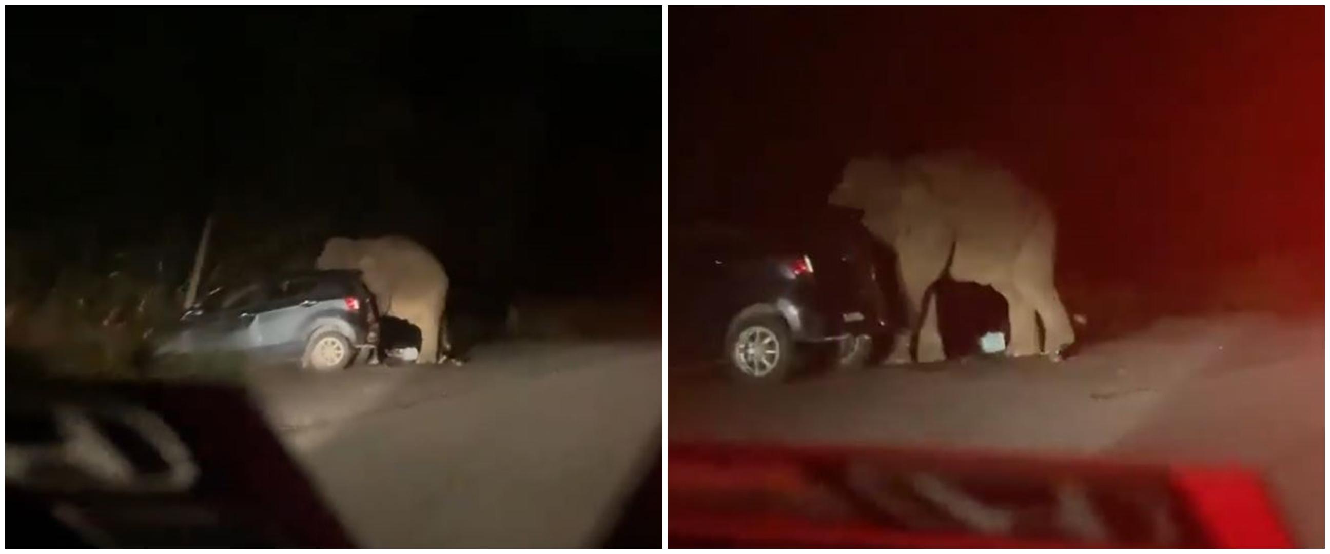 Viral video gajah mengamuk & rusak mobil di jalan, ini penyebabnya