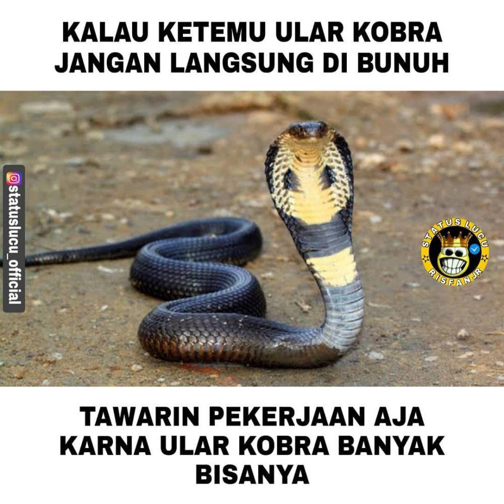 meme lucu ular berbagai sumber