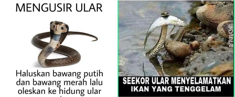 8 Meme lucu tentang ular ini bikin tepuk jidat