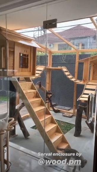 rumah kucing seleb berbagai sumber