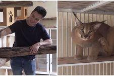 Potret rumah kucing milik 5 seleb, luas dan fasilitasnya lengkap