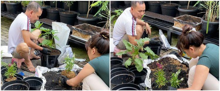 9 Penampakan kebun milik ayah Ayu Ting Ting, subur dan asri