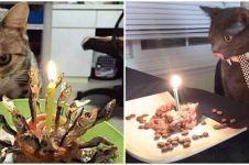 7 Potret kocak perayaan ulang tahun kucing, bikin gemas