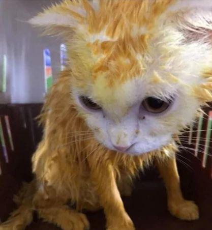 kucing jadi kuning worldofbuzz