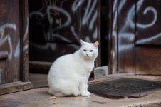 Gara-gara pengobatan herbal, kucing putih ini berubah mirip Pikachu