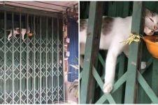 7 Potret perjuangan kucing mencari makan ini bikin sedih