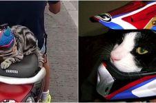 7 Potret kucing pakai 'helm' ini tampilannya bikin gemas