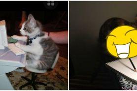 10 Cocoklogi lucu kucing kalau ikut kegiatan ekstrakurikuler sekolah