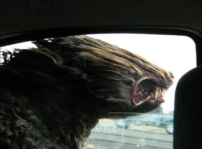 Potret anjing naik mobil Berbagai sumber