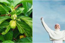 10 Manfaat daun mengkudu untuk kesehatan, melancarkan aliran darah