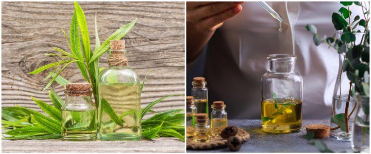 12 Manfaat minyak kayu putih untuk kesehatan, atasi nyeri sendi
