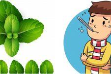13 Manfaat daun mint bagi kesehatan, mengobati flu hingga kanker