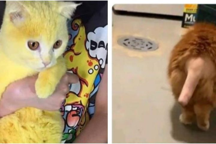 8 Kucing ini miliki bulu yang aneh dan tak biasa usai operasi