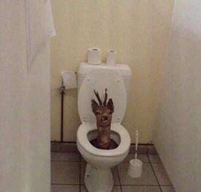 Penampakan toilet absurd Berbagai sumber