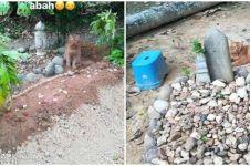 Kucing ini setia tunggui makam majikan, kisahnya bikin haru