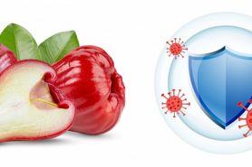 15 Manfaat jambu air untuk kesehatan, meningkatkan sistem imun