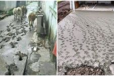 15 Aksi binatang rusak cor semen jalan, bikin ngelus dada