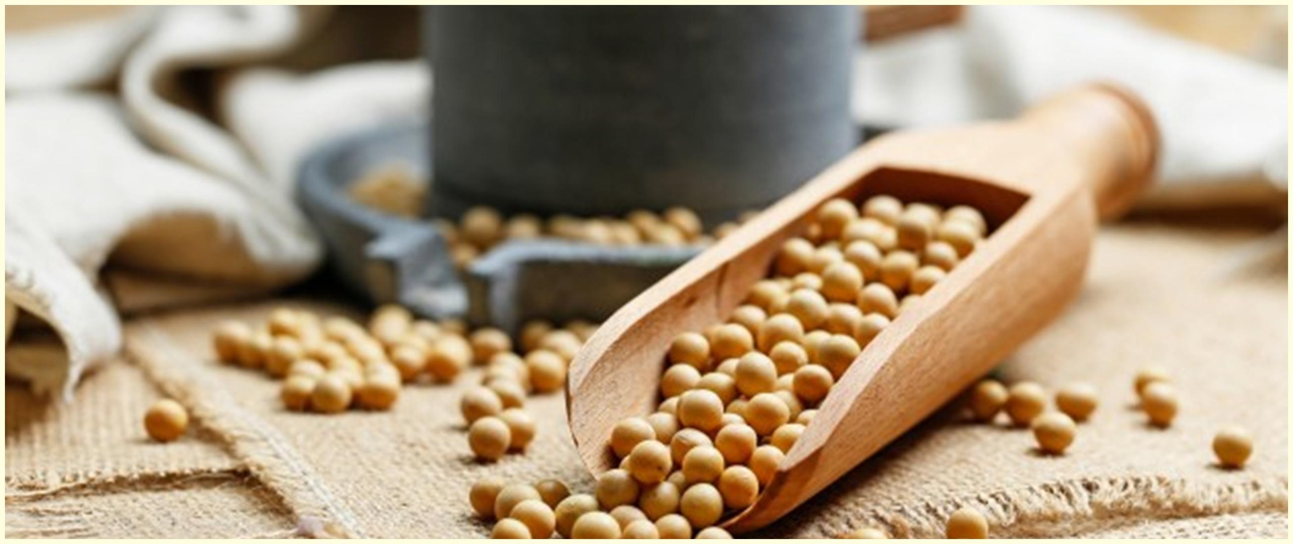 10 Manfaat kedelai untuk kesehatan, mengatasi gejala menopause