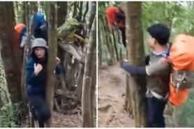 Viral video pendaki naik pohon karena ada babi hutan, bikin deg-degan