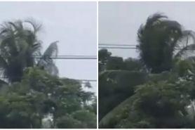 Viral pohon bergerak sendiri padahal tak ada angin, bikin merinding