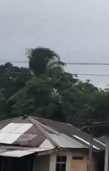 Pohon kelapa bergerak sendiri Instagram/@ndorobeii
