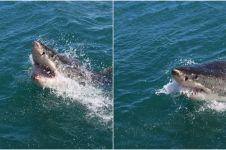 Viral seorang wanita hamil selamatkan suami dari serangan hiu