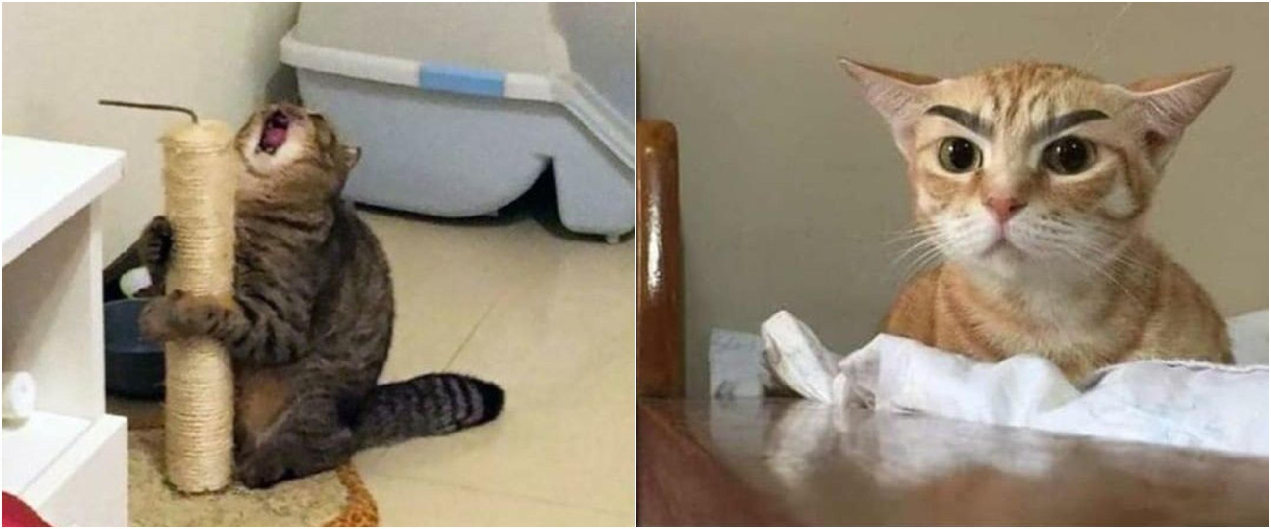10 Status lucu WA kucing lagi kerja ini bikin gemas sambil cekikikan