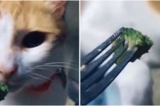 Diberi sayur oleh pemiliknya, kucing ini tunjukkan ekspresi kocak