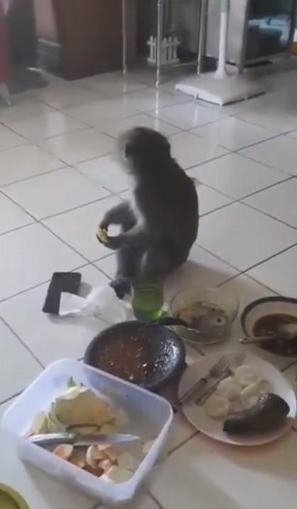 Monyet masuk rumah Twitter/@vikanniper