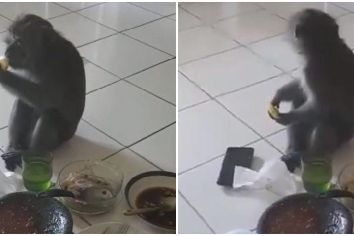 Viral video monyet tiba-tiba masuk rumah dan ikut makan rujak