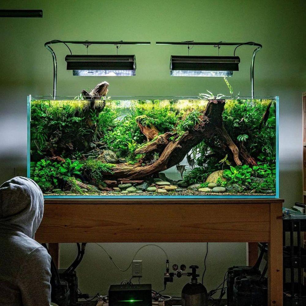 Cara merawat tanaman aquascape berbagai sumber