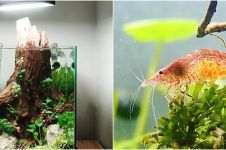 5 Cara merawat tanaman aquascape agar cantik dan subur