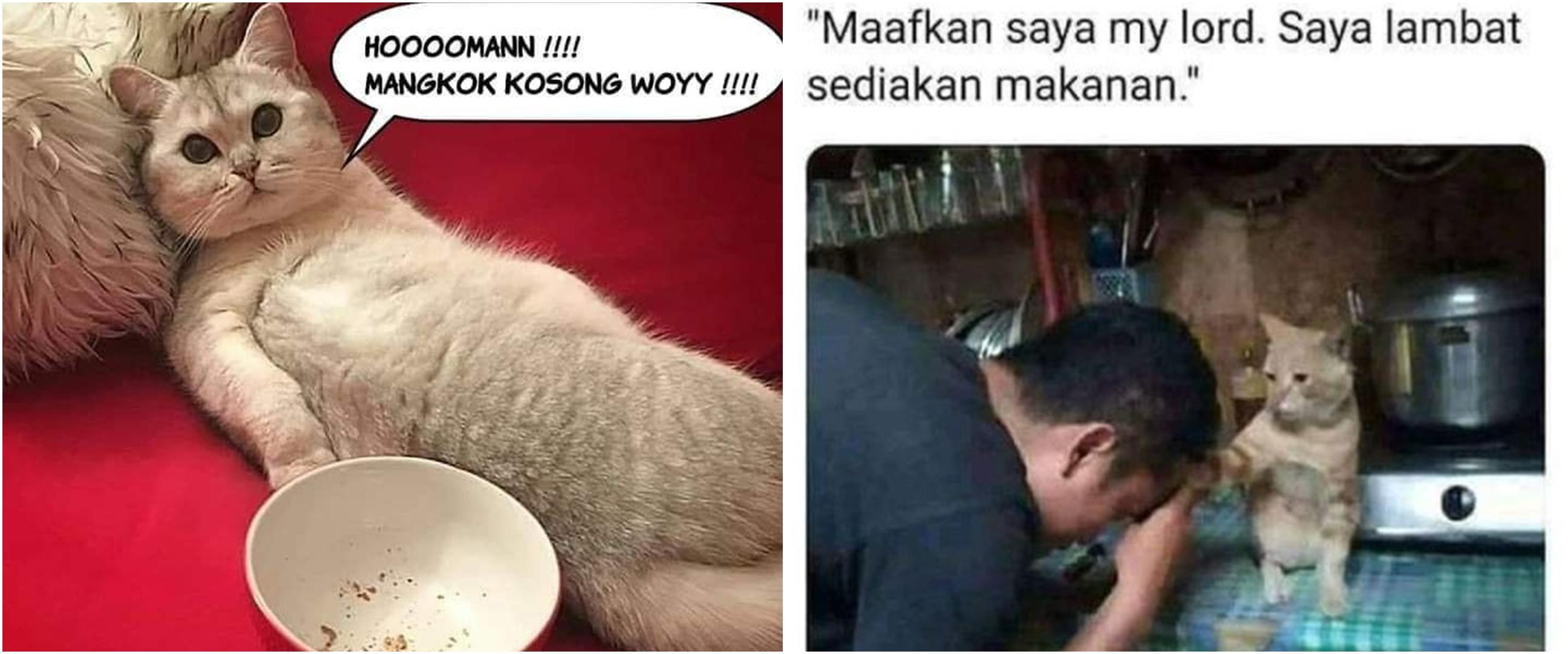 10 Meme lucu kalau hewan peliharaan dan majikan tukar peran