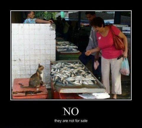 ketika hewan jadi majikan Berbagai sumber